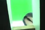 エロ画像6