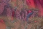 エロ画像12